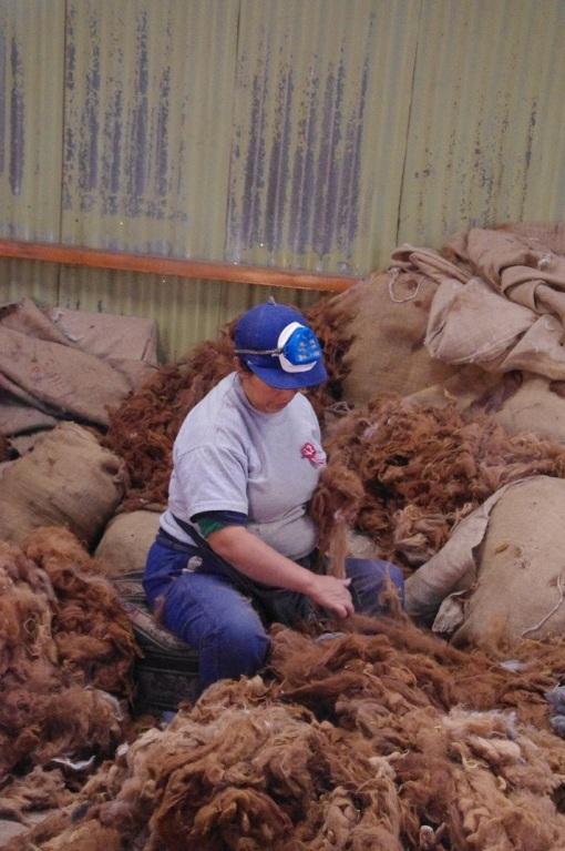 alpaca wool ethical fashion
